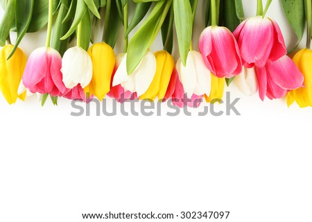 Tulips on white background - stock photo