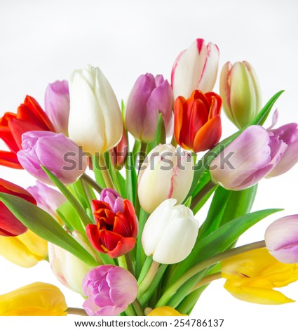 tulips over white background, bouquet of spring easter flowers. - stock photo