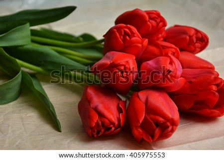 Tulips spring flowers. Red tulips bouquet. Fresh tulip plants from the garden on vintage background. Spring flowers. Countryside nature. Springtime photo, invitation or postcard. - stock photo