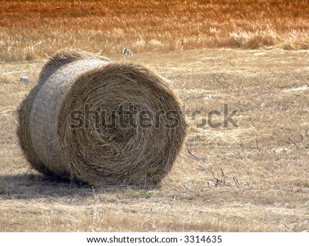 Tumbleweed and haystacks in a field in the Mediterranean - stock photo