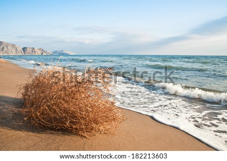 tumbleweed on the beach in the photo - stock photo
