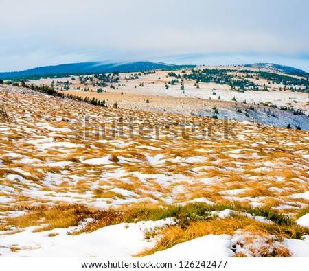Tundra landscape in Jeseniky - stock photo