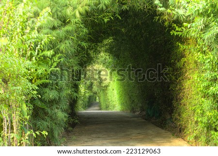 Tunnel bamboo tree over the footpath - stock photo