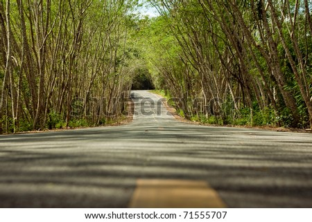 Tunnel of tree in ant eye view shot, Kaeng-krajarn Nation park, Petchaburi Thailand. - stock photo
