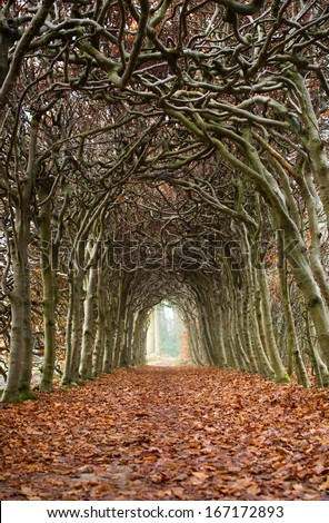 Tunnel of trees on an hazy, autumn day. - stock photo
