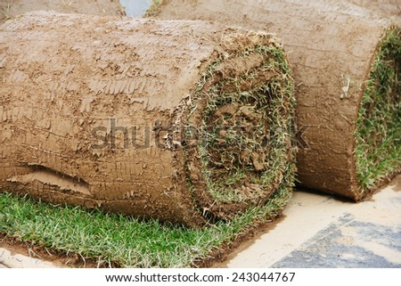 Turf grass rolls partially unrolled close up - stock photo