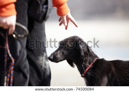 Turkmenian greyhound and trainer outdoors. Natural light and colors - stock photo