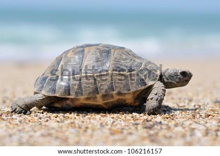 turtle,alanya, animal - stock photo