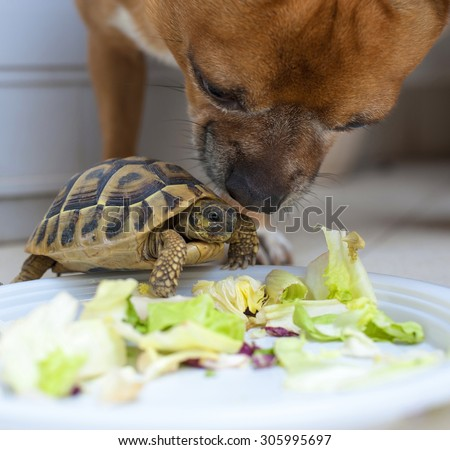 Turtle and Dog in love on a white  - stock photo