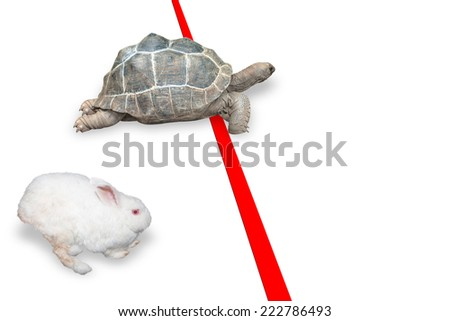Turtle and rabbit effort running competition sport on red line finish the result is winning turtle concept of business success - stock photo