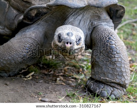 Turtle big - stock photo