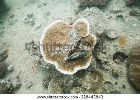 turtle head skull on hart coral - stock photo