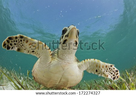 Turtle Hug - stock photo