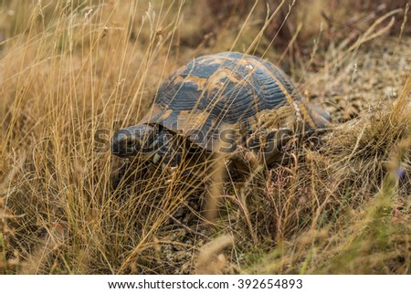 Turtle in the grass - stock photo