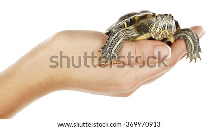 Turtle in woman hands isolated on white background - stock photo