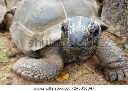 Turtle looking funny at the camera - stock photo