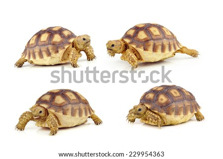 turtle on over white background - stock photo