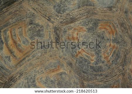 turtle skin - stock photo