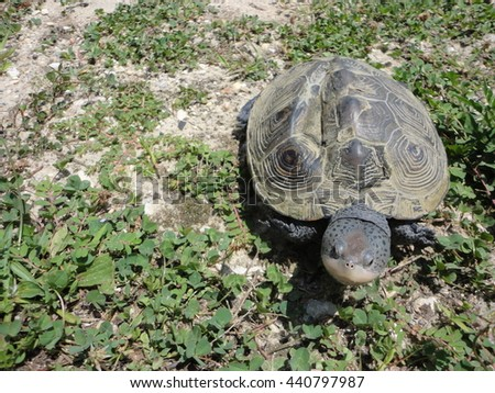 Turtle / Tortoise At The Jersey Shore In The Grass Alone - stock photo