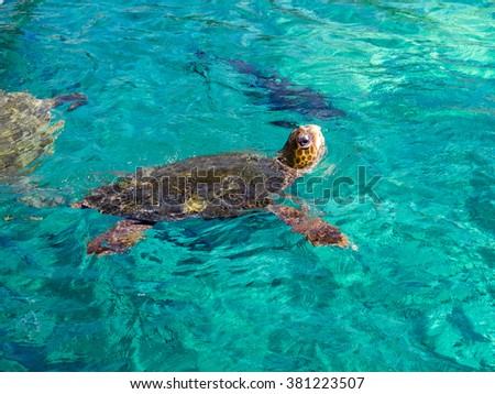 Turtle Views around the Caribbean island of Curacao - stock photo