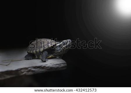 Turtle walking slowly on the verge. Compared to people who face barriers to success. /made to the concept - stock photo