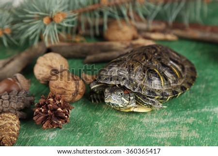 Turtle with acorn and autumn leaves on green background - stock photo