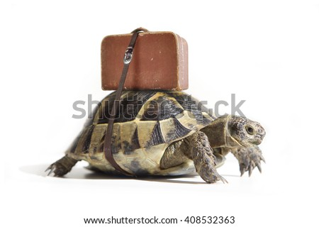Turtle with suitcase on a back. Selective Focus. - stock photo