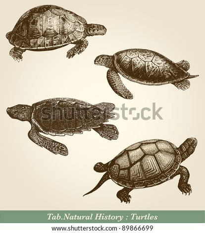 "Turtles - vintage engraved illustration - ""Cent récits d'histoire naturelle"" by C.Delon published in 1889 France - stock photo"