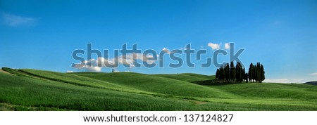 Tuscan Cypresses, Val d'Orcia, Tuscany, Italy - stock photo