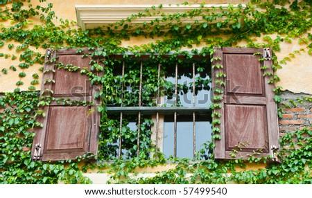 Tuscan window box with climber - stock photo