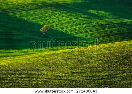 Tuscany country rolling hills landscape,Tuscany, lonely tree and green fields on sunset. Siena, Crete Senesi. Italy, Europe. - stock photo