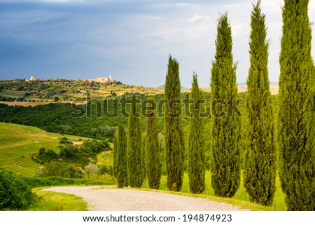Tuscany, cypress trees and landscape in Italy with Montalcino on background - stock photo