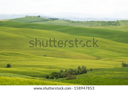 Tuscany - green typical landscape in spring time - stock photo