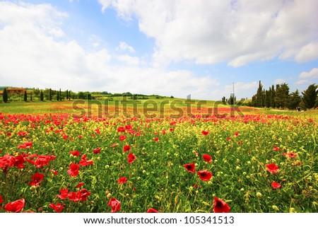Tuscany, Italy. Poppies field - stock photo