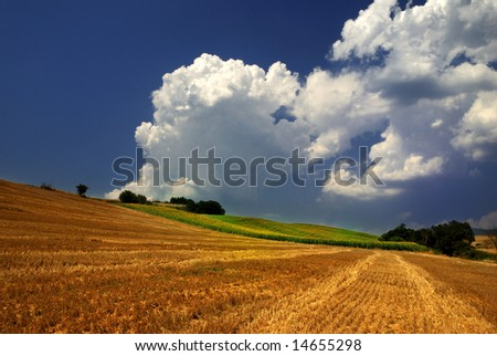 Tuscany landscape: a field of sunflowers and a beautiful blue sky on the background - stock photo