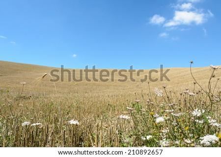 Tuscany Ruins - stock photo