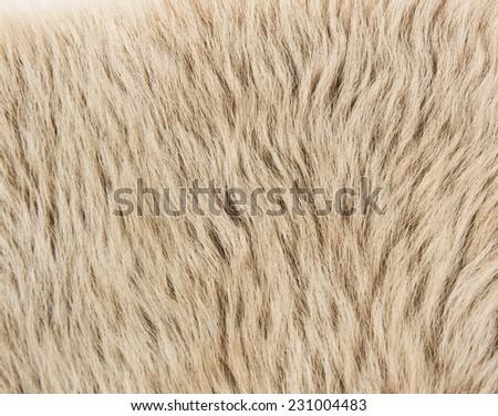 Tuscany sheep beige fur background for winter fashion theme - stock photo