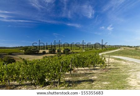tuscany vineyard - stock photo