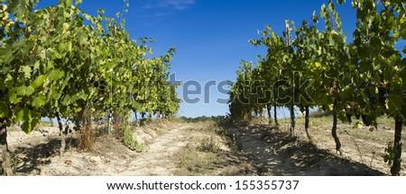 tuscany vineyard, chianti - stock photo