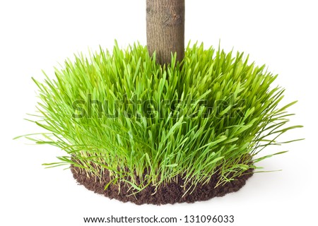 Tussock grass with a tree trunk. Isolated on a white. - stock photo