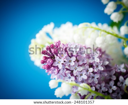 twig blossoming lilac on a blue background - stock photo