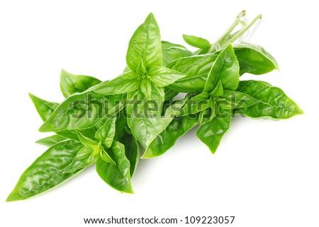 twig fresh basil isolated on white background - stock photo