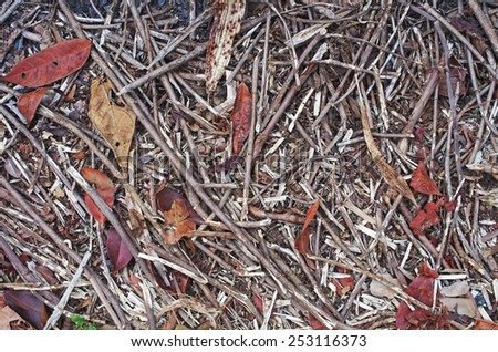 twig litter and dry leafs on the floor as background - stock photo