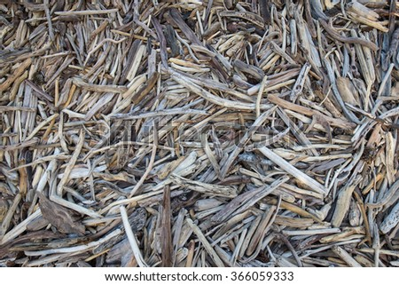 Twig Mass - stock photo