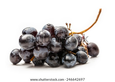Twig of black grapes on white background - stock photo