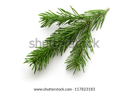 Twig of evergreen fir on white - stock photo