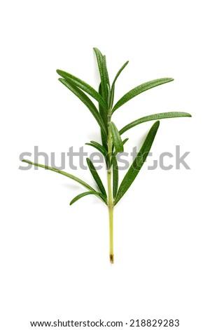 twig of rosemary isolated on white - stock photo