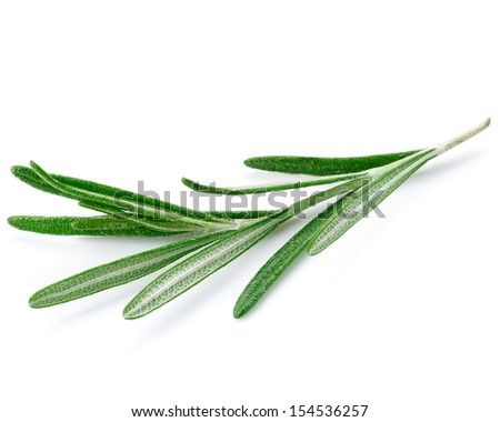 Twig of rosemary on a white background  - stock photo
