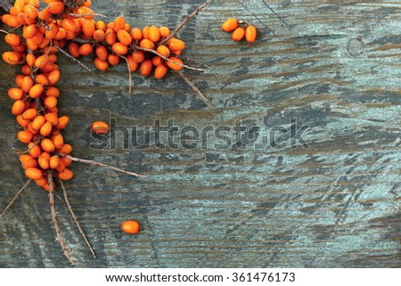 Twig sea buckthorn berries on a wooden background. Autumn decorative frame or background with fresh ripe sea-buckthorn berries and old wooden plank. - stock photo