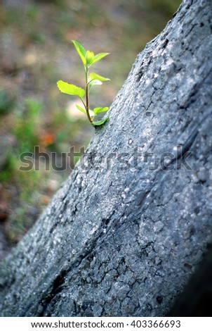 twig sprouting from a tree on a blurred background - stock photo